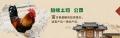 banner-公鸡